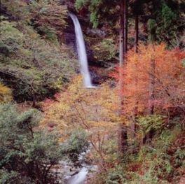 阿瀬渓谷の紅葉