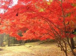 滑床渓谷・雪輪の滝の紅葉(愛媛県・宇和島市)
