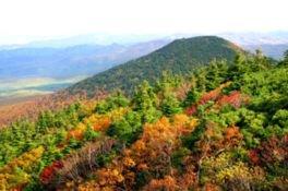 八甲田山(山頂付近)の紅葉