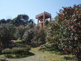 宮崎市椿山森林公園