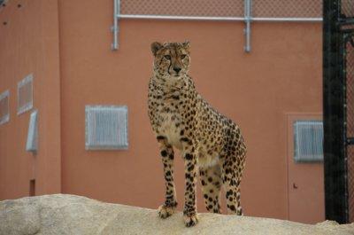 【一部休止】広島市安佐動物公園
