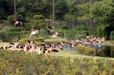 宮崎市フェニックス 自然動物園
