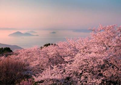 【2020年花見シーズン入山禁止】紫雲出山の桜