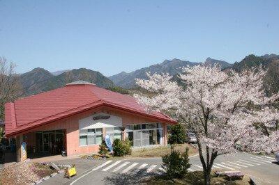 天岩戸温泉の桜
