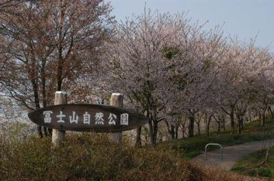 冨士山自然公園の桜