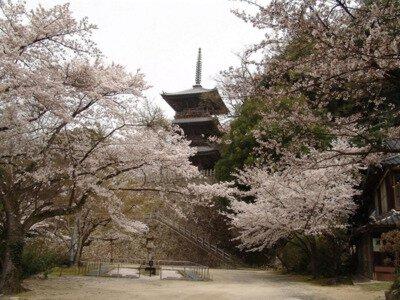 清水公園の桜(島根県)