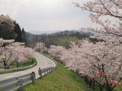 野坂桜並木