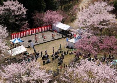 かみかわ桜の山 桜華園の桜