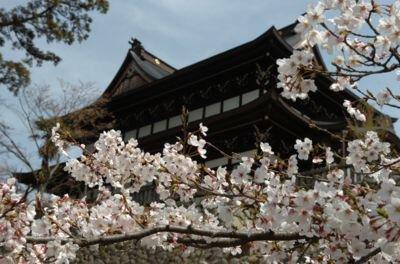 関善光寺の桜