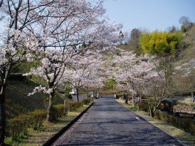 生活環境保全林「みたけの森」の桜