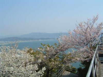 和歌の浦(高津子山)の桜