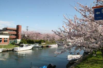 内川周辺の桜並木