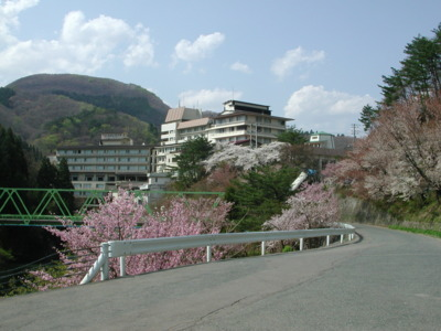 花巻南温泉峡の桜