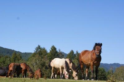 木曽馬の里・乗馬センター