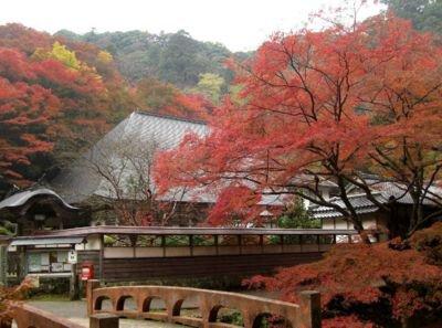 鰐淵寺の紅葉
