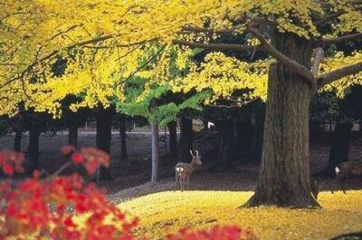 奈良公園の紅葉情報