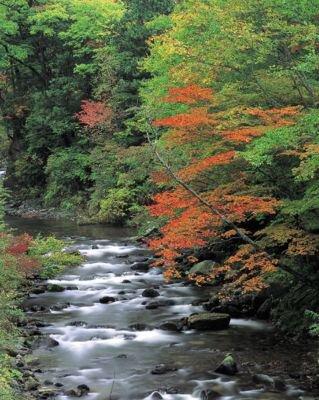 照葉峡の紅葉