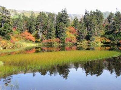 大雪山(高原温泉)の紅葉