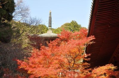 高雄(神護寺)の紅葉