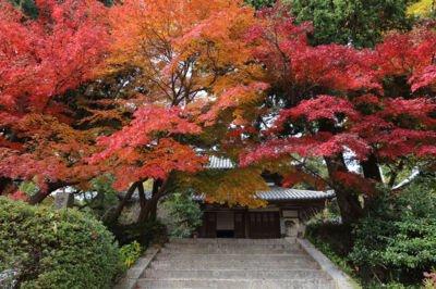 覚苑寺の紅葉