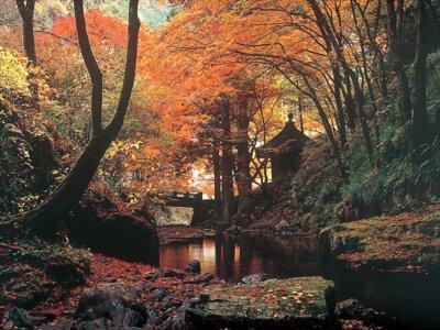 蓬莱山の紅葉
