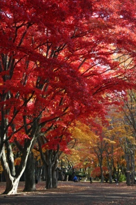 香雪園(見晴公園内)の紅葉