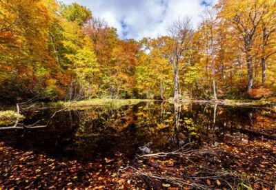 奥裾花渓谷の紅葉