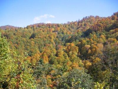 カヤの平高原の紅葉