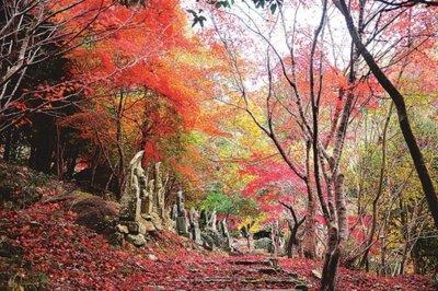 竹谷山渓谷の紅葉