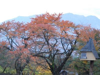 清春芸術村周辺の紅葉