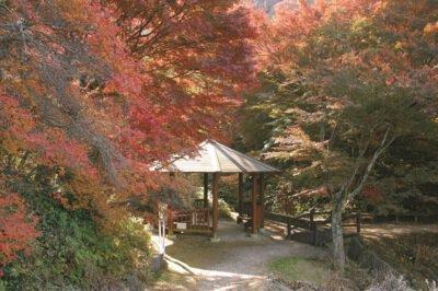 宮路山の紅葉