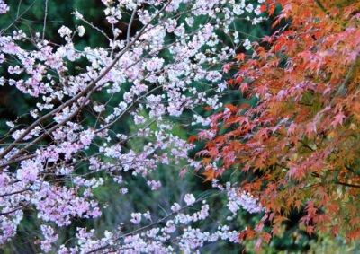 城峯公園の紅葉