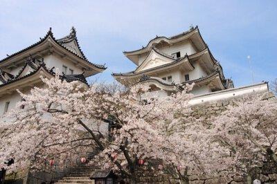 上野公園の桜(三重県)
