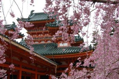 「平安神宮の桜」のお花見(京都市左京)