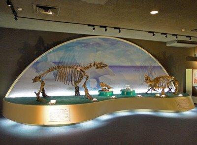 【臨時休館】瑞浪市化石博物館