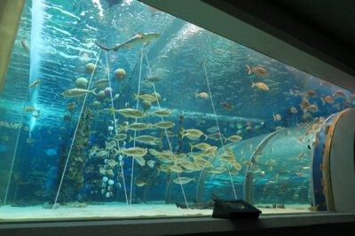 【一部休止】青森県営浅虫水族館