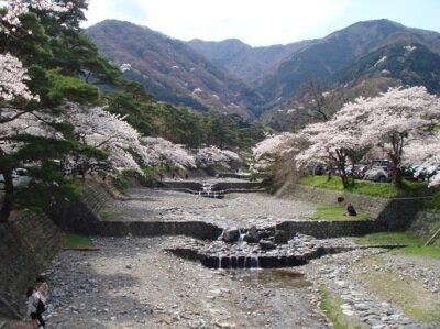 【臨時休園】養老公園の桜