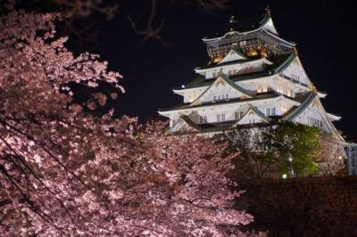 「大阪城公園の桜」のお花見(大阪市中央区)