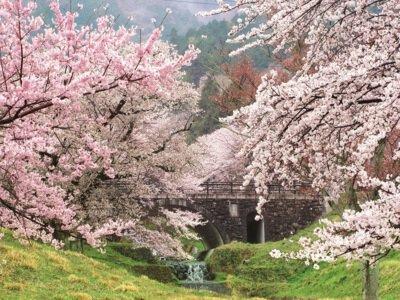 霞間ヶ渓の桜