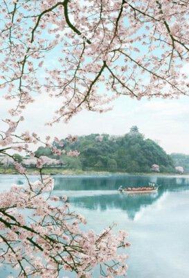 犬山市木曽川河畔一帯の桜