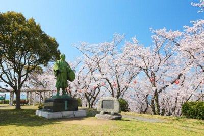 赤穂東御崎公園の桜