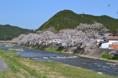 【臨時閉鎖】農村型リゾート クリエイト菅谷の桜