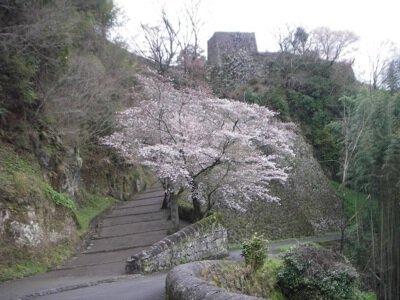 岡城跡の桜