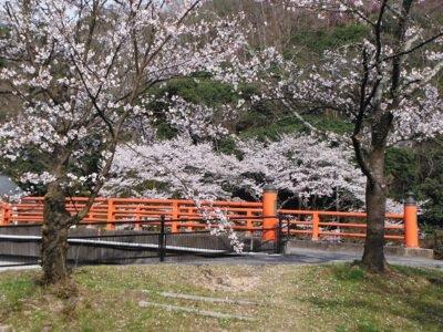 芳嵐園の桜
