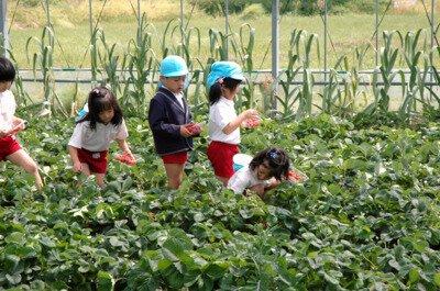 松本農園 いちご狩り