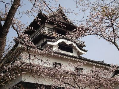 犬山城の桜