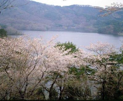 大山公園の桜(山形県)