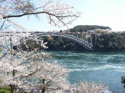 西海橋公園の桜