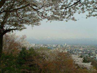 呉羽山公園の桜