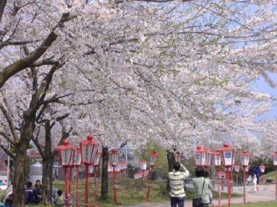 【臨時休園】愛宕公園の桜(青森県)